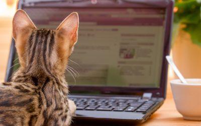 Capture Website Visitors Attention